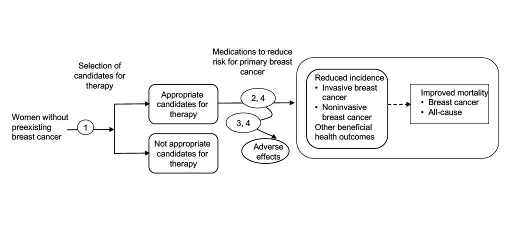 Figure 1 is a flow diagram of selection of candidates for medications to reduce the risk for primary breast cancer. Women without preexisting breast cancer are screened and sorted into either appropriate or inappropriate candidates for therapy. Women who are appropriate candidates for therapy receive medications to reduce the risk for primary breast cancer. Women may experience adverse effects due to these medications. Women who are treated with these medications may have reduced incidence of invasive or noninvasive breast cancer, which may lead to improved breast cancer-related mortality and all-cause mortality.