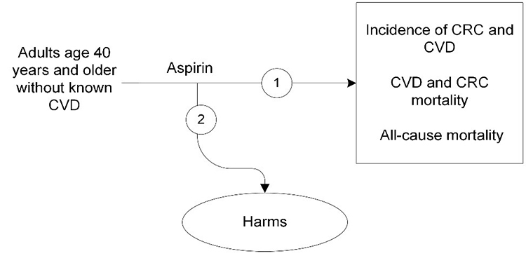 Figure 1 is the analytic framework that depicts the two Key Questions to be addressed in the systematic review. The figure illustrates how regular aspirin use in patients without known cardiovascular disease (CVD) may reduce CVD- and colorectal cancer (CRC) incidence and mortality, or all-cause mortality  (KQ1). Additionally, the figure depicts the posibility that regular aspirin use increases the incidence of major gastrointestinal bleeding, intracranial bleeding, or other serious harms (KQ2).